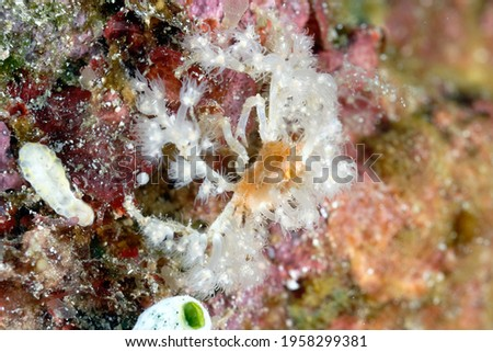 A picture of a well camouflaged spider crab