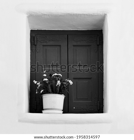 Window with flower in flowerpot. Greece. Black and white photography