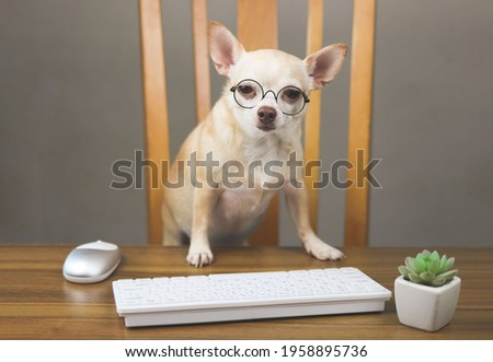 Portrait of moody or sleepy chihuahua dog wearing eyeglasses sitting at wooden table with computer keyboard, mouse and cactus.