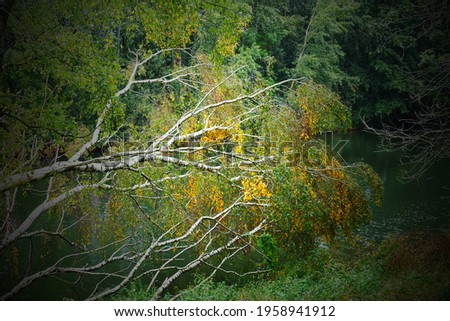 Fallen birch tree on the edge of a lake, the leaves are already yellow in the beginning of autumn and shine in the sun. The image is intentionally strongly vignetting