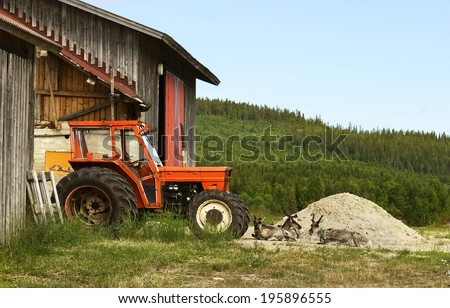 Reindeer on a pile of sand near the old tractor #195896555