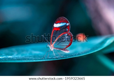 Macro shots, Beautiful nature scene. Closeup beautiful butterfly sitting on the flower in a summer garden. Royalty-Free Stock Photo #1959323665