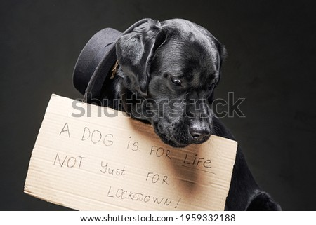 Fashionable and sad dog with hat and cartoon sign with a text