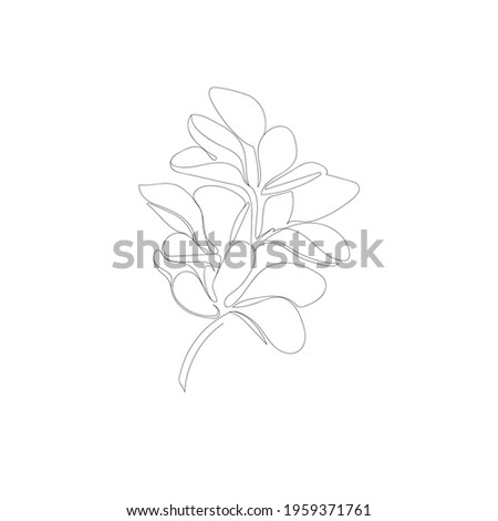 Black outline branch with leaves (Barberry) on white background. Vector illustration. Royalty-Free Stock Photo #1959371761