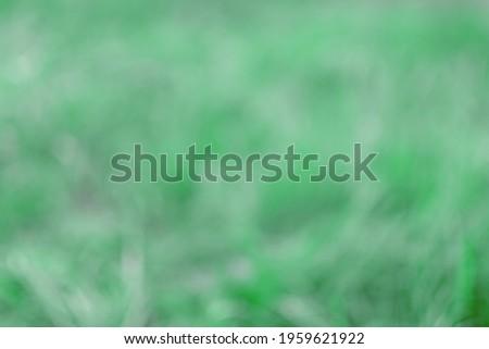Defocused image. Defocused shot of grass. Royalty-Free Stock Photo #1959621922