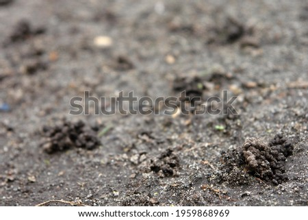 Close up of the ground with small clods forming mounds of sands caused by the activity of invertebrates in the ground. Poland, Europe Royalty-Free Stock Photo #1959868969