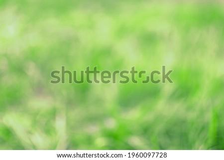 Defocused image. Defocused shot of grass. Royalty-Free Stock Photo #1960097728