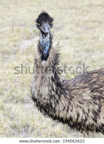 Emu, close-up portrait #196063622