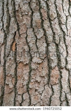 Bark of pine tree. Seamless tree bark background. Brown texture of the old tree. Natural coniferous bark background Royalty-Free Stock Photo #1960725052
