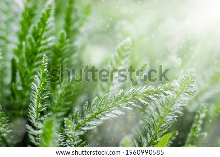 Summer or spring background with fresh green grass with sunbeams. An image of purity and freshness of nature. Royalty-Free Stock Photo #1960990585