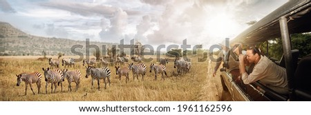 Group of young people watch and photograph wild zebras on safari tour in national park on Tanzania. Adventure and wildlife exploration in Africa. Royalty-Free Stock Photo #1961162596