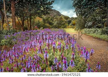 Beautiful View on a Path Dotted with Beautiful Purple Flowers. National Botanical Garden. South Africa. Royalty-Free Stock Photo #1961472121