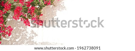 Pink bougainvillea on a white wall with copyspace, mediterranean spring and summer panoramic background Royalty-Free Stock Photo #1962738091