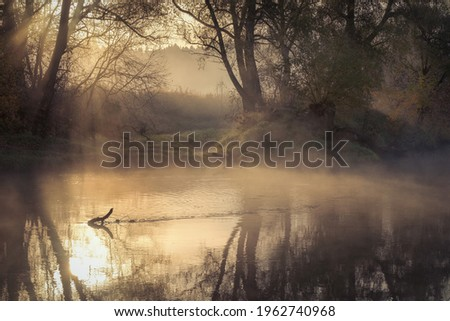 Making my way along the river-bank with a camera, out of the corner of my eye I notice movement in the snags on the opposite side. Royalty-Free Stock Photo #1962740968