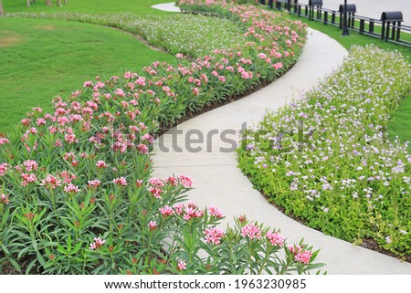 Cement path walkway with Oleander rose bay and Coromandel blooming flower beside in the garden Royalty-Free Stock Photo #1963230985