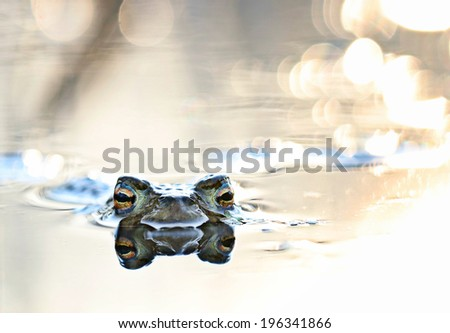 head frog in swamp close #196341866