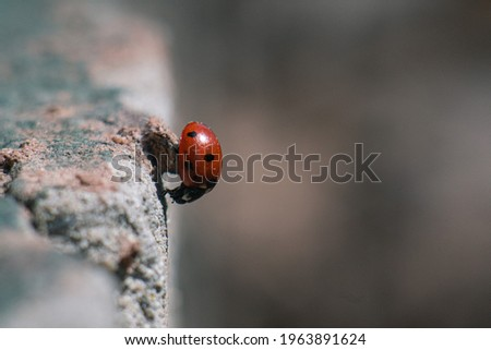 Macro picture of a ladybug on an old cement wall