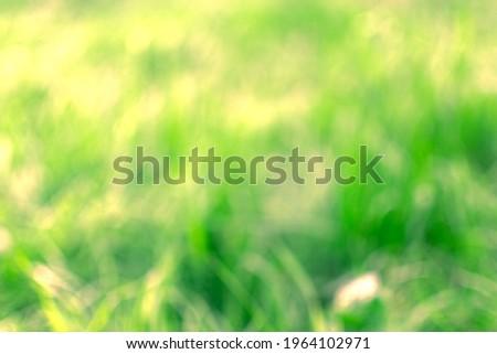 Defocused image. Defocused shot of grass. Royalty-Free Stock Photo #1964102971