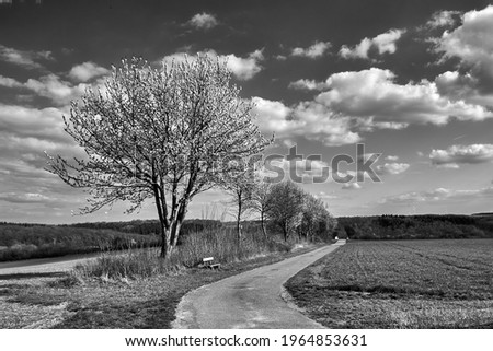 A Path in Field and Leaf Less Tree Monochrome Photography