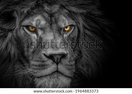 Lion king , Portrait Wildlife animal Royalty-Free Stock Photo #1964883373