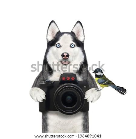 A dog husky photographer holds a black photo camera. White background. Isolated.