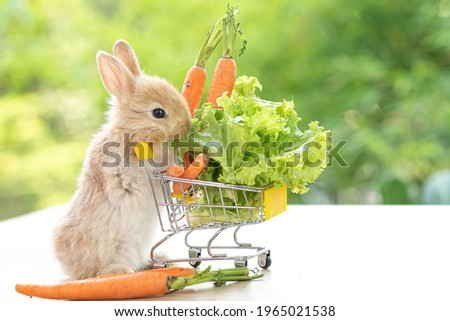 Lovely bunny easter fluffy baby brown rabbit love to eat  carrot is holding shopping cart full of green vegetable, carrots, on nature background. Delicious healthy green good food. Healthy lifestyle.