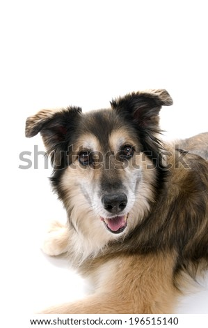 A furry dog lying with his mouth open. #196515140