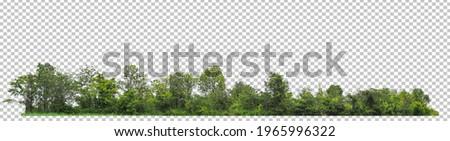 ้high resolution of forest on transparent picture background with clipping path for easy to selection  Royalty-Free Stock Photo #1965996322