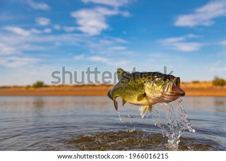 Big Bass Largemouth - Fishing Royalty-Free Stock Photo #1966016215