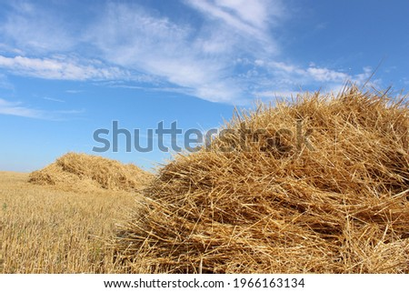 A haystack or straw for feeding herbivores against a blue sky. Mown dry straw (hay) in a stack in a farmer's field against the sky in sunny weather. A big pile of straw in a field. Straw bales.  Royalty-Free Stock Photo #1966163134