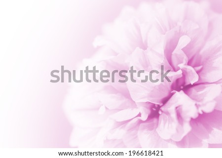 beautiful flowers made with color filters abstract #196618421