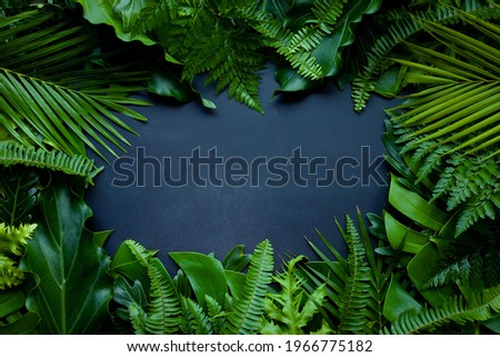 Creative nature layout made of tropical leaves. Summer concept. Fern Palm and monstera leaf on wall textures. Nature beach background layout with free text space. Royalty-Free Stock Photo #1966775182