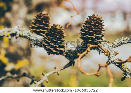 spring, a bumps on a branch. High quality photo Royalty-Free Stock Photo #1966835722