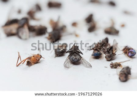 Dead dried insects from a night light lamp on a white background. Flies, cockroaches, beetles and wasps on a white background. Texture of dried flying insects Royalty-Free Stock Photo #1967129026