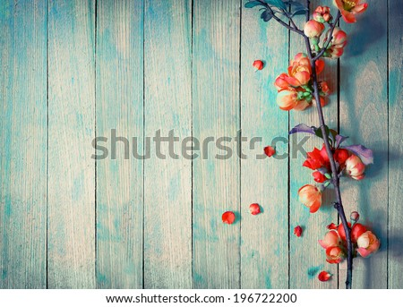 Spring Blossom over wood background. Spring Flowers on wooden background
