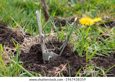 Close up of a mole scissor trap in the ground Royalty-Free Stock Photo #1967438359