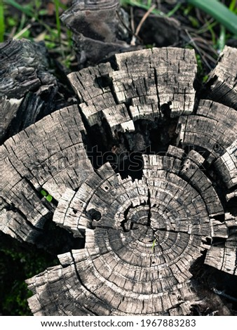 decaying wooden log in a forest, tree trunk decaying Royalty-Free Stock Photo #1967883283