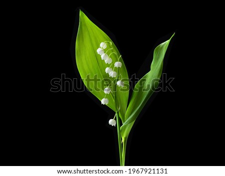 Lily valley flower isolated on black background. Beautiful single muguet flower with green leaves with clipping path, side view. Naturе object for design to women's day, mother's day Royalty-Free Stock Photo #1967921131