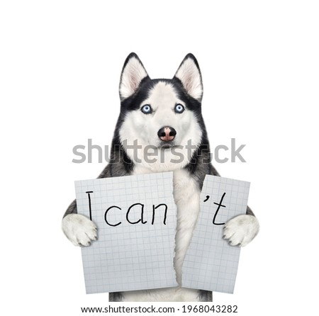 A dog husky tears a sheet of paper with the lettering  I can't. White background. Isolated.