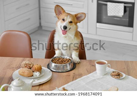 Cute funny dog at table in kitchen Royalty-Free Stock Photo #1968174091