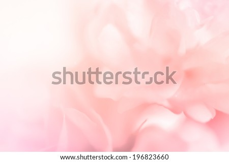 sweet color roses in blur style for background