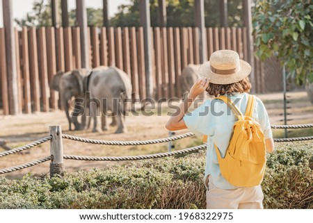 Woman student with a yellow backpack watches the behavior of elephants in a zoo or nature park reserve Royalty-Free Stock Photo #1968322975