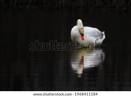 profile of white swan on blue misty lake Royalty-Free Stock Photo #1968411184