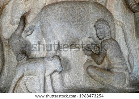Milking of cow with its cattle by a man is depicted as the bas relief sculpture in Mahabalipuram, Tamilnadu. Indian rock art of ancient historical animal sculptures at rock cut temples in Tamil nadu. Royalty-Free Stock Photo #1968473254