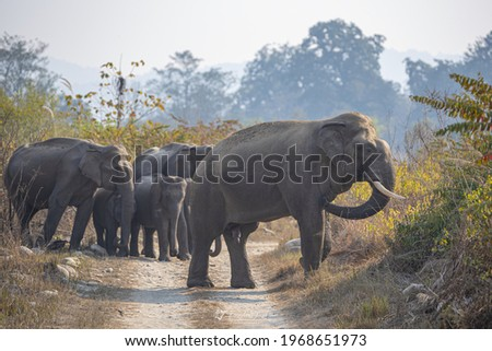 Asiatic Elephant Tuskers are found in various parts of India. Elephants are known for their long lasting memory and they generally take the same route while heading towards a destination Royalty-Free Stock Photo #1968651973