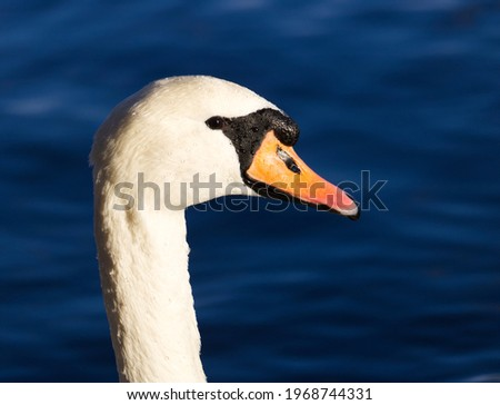 profile pic of a swan sea at background