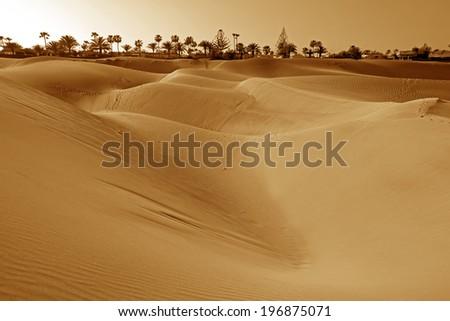 Dunes of Maspalomas, Gran Canaria #196875071