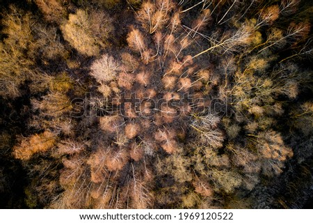 Aerial top view of summer green trees in forest in rural Finland. Drone photography Royalty-Free Stock Photo #1969120522