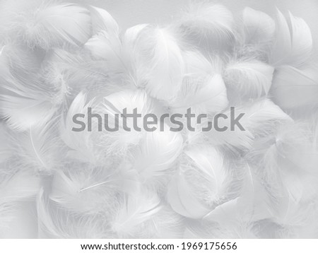 White fluffy bird feathers. Beautiful fog. A message to the angel. The texture of delicate feathers. soft focus. Royalty-Free Stock Photo #1969175656