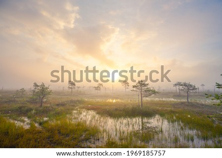Sunset over swamp Yelnya - one of the largest swamps in Europe Royalty-Free Stock Photo #1969185757